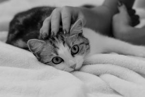 pouvoirs-therapeuthiques-chat-4